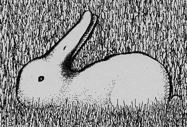 pato-conejo-shepard